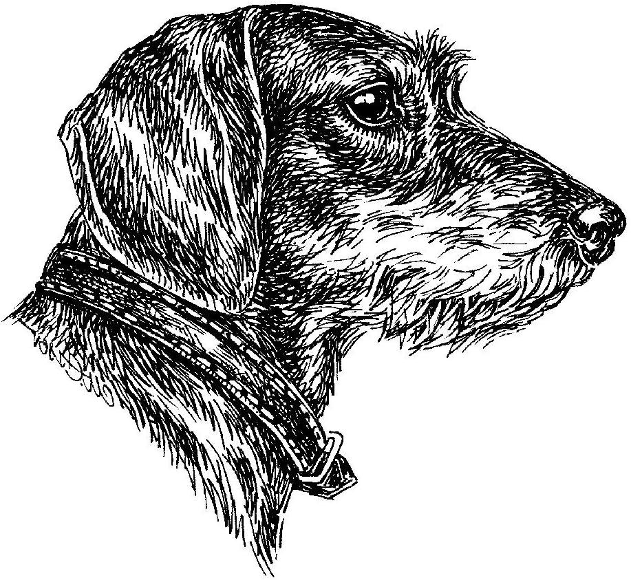 Schecker Autoaufkleber Hundeaufkleber Ideal Für Helle Autosrauhhaar Dackel Profil Haustier