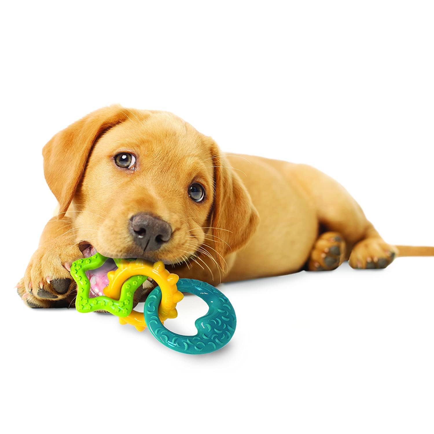 Nylabone Puppy Teething Rings Amazon Pet Supplies