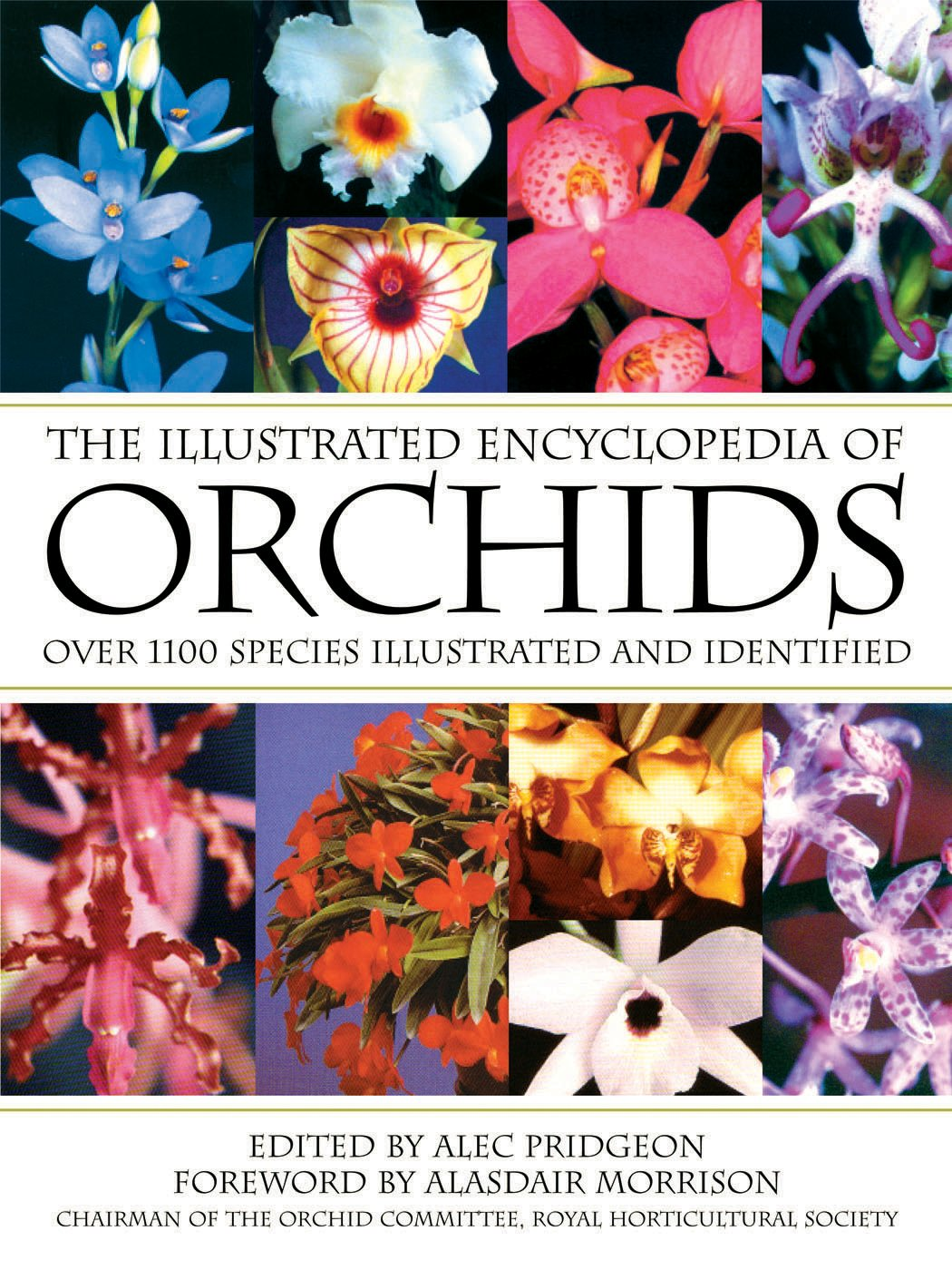 Download The Illustrated Encyclopedia of Orchids ebook