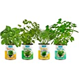 Back to The Roots Garden-in-a-Can Grow Organic Herbs 4 Pack Variety Basil/Cilantro/Dill/Mint. DIY Indoor Organic Herb Growing Kit Grow Edible Herbs in Your Home Perfect Cooking Gift