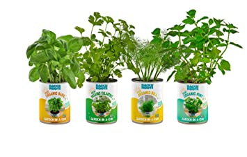 Bon Back To The Roots Garden In A Can Grow Organic Herbs 4 Pack