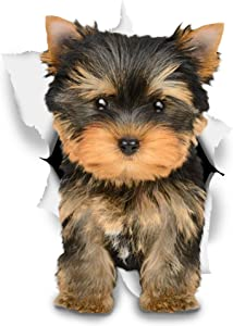 Winston & Bear 3D Dog Stickers - 2 Pack - Adorable Brown Yorkie Stickers for Wall, Fridge, Toilet and More - Yorkie Gifts - Retail Packaged Yorkshire Terrier Wall Decals
