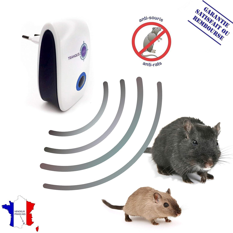 was tun gegen ratten free good ratten fangen ohne gift new was hilft gegen ratten mit. Black Bedroom Furniture Sets. Home Design Ideas