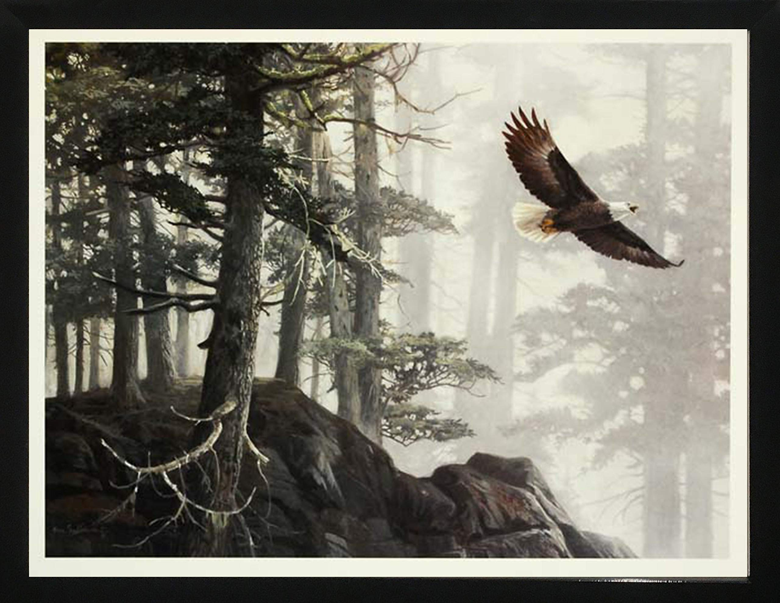 Framed Art''Flying High'' by Alan Sakhavarz by