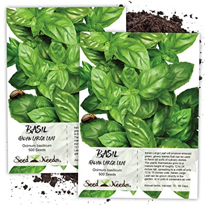 Seed Needs, Italian Large Leaf Basil Herb (Ocimum basilicum) Twin Pack of 500 Seeds Each Non-GMO : Garden & Outdoor