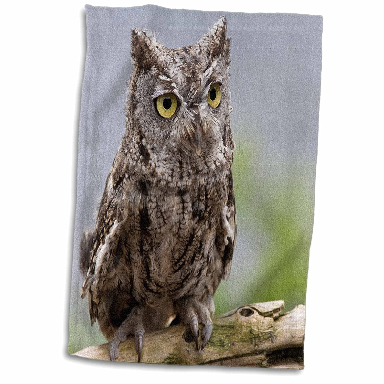 Western Screech Owl-Us02 Bja0238-Jaynes Gallery Hand//Sports Towel 15 x 22 3D Rose USA-Alaska-Ketchikan