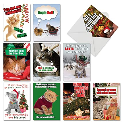 a5559xsg b1x10 petigreet cats christmas assorted box of 10 funny christmas cards