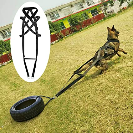 FidgetKute - Arnés para Pesas de Perro para Deportes y Ejercicios ...