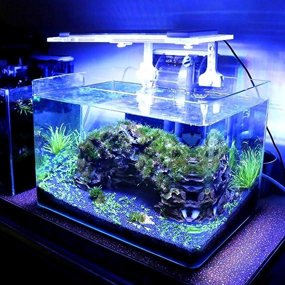 Lámpara Acuario Luces Impermeable LED para Acuarios de Peces y ...