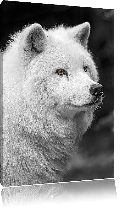 Magnifique Noir Blanc Polaire Loup Sur Toile énorme Xxl Photos Complètement Encadrée Avec Civière Impression D Art Sur La Photo Murale Avec