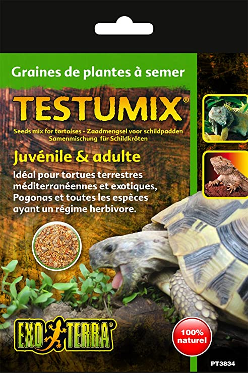graine tortue