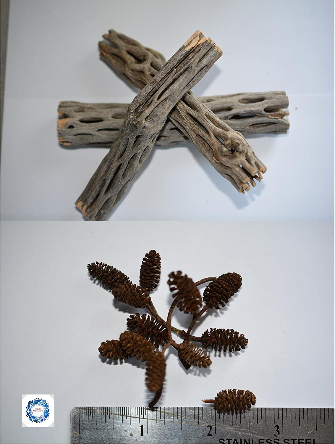 (3) CHOLLA WOOD 5