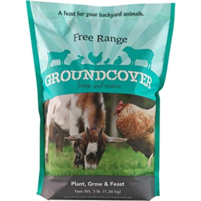 Barenbrug Free Range GroundCover Forage Seed Mixture Ideal for Chickens, Game Birds, Goats, and Sheep, 3 lbs, Blue : Garden & Outdoor