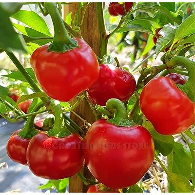 Liveseeds - Cherry Bomb Pepper Red Round Hot 15 Finest Seeds : Garden & Outdoor