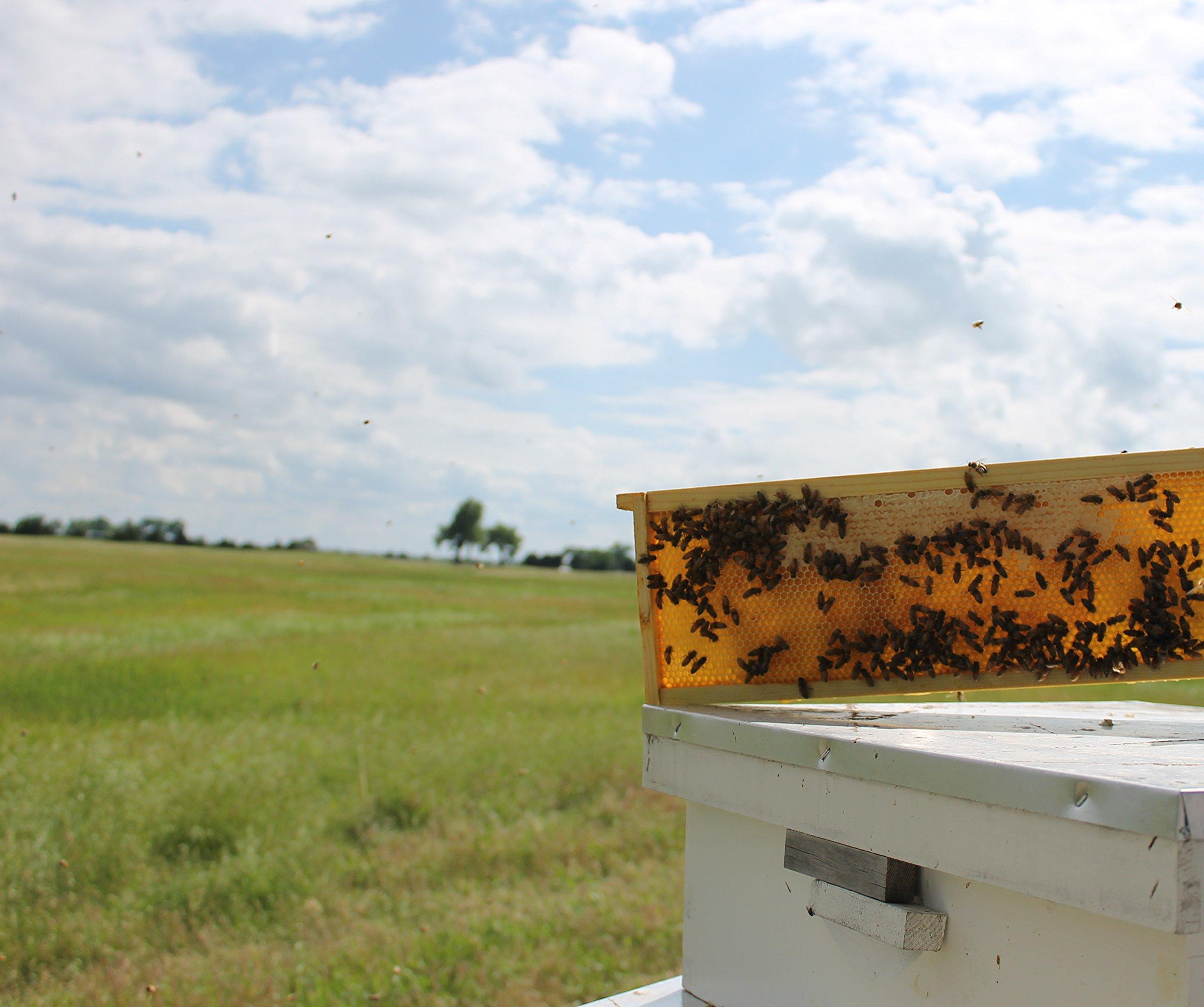 Raw Honey Pure Natural Nebraska Honey One 2lb Jar by Prairie River Honey Farm (Image #5)