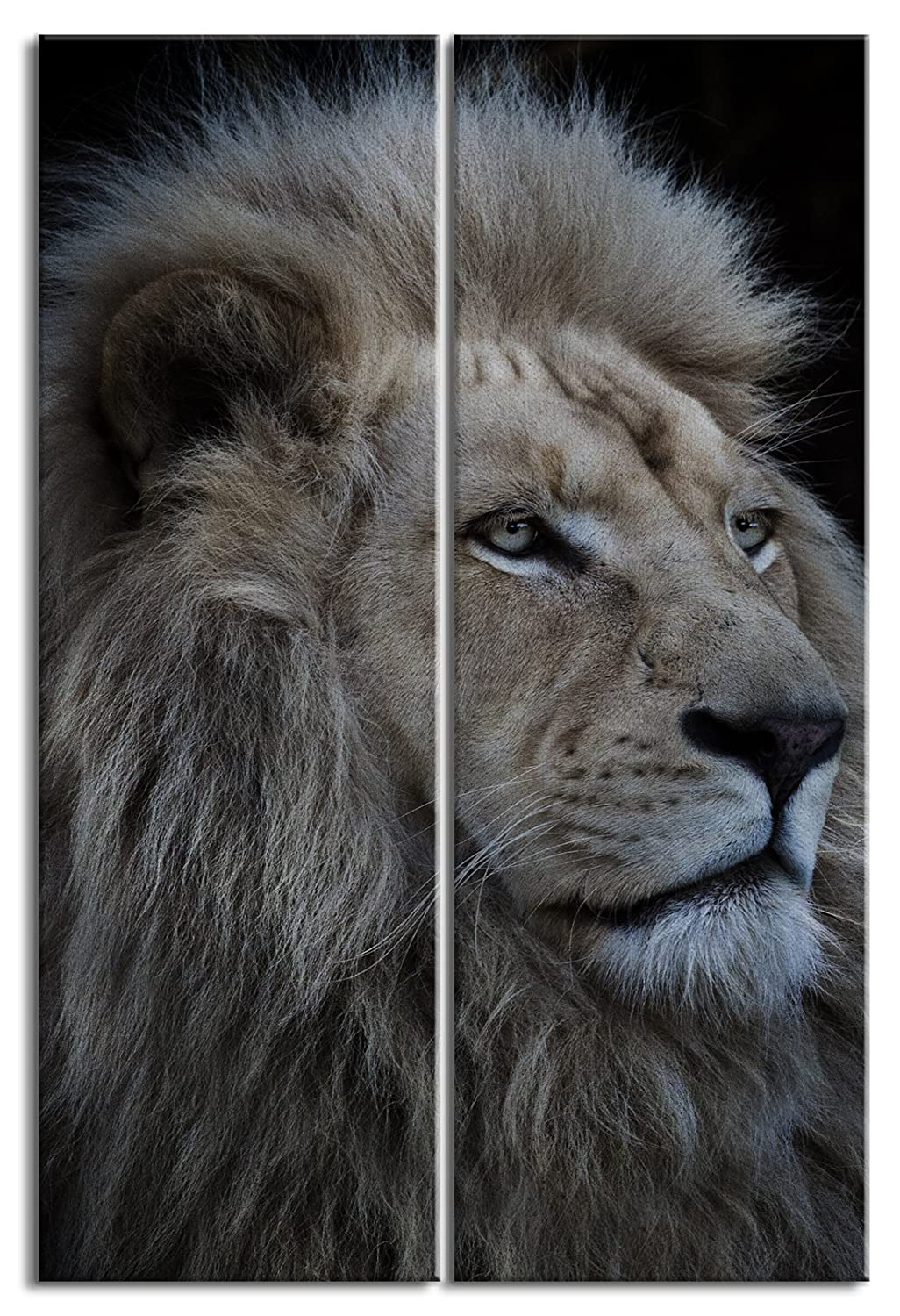 JP London Ready to Hang and Proudly made in North America DMCNV1X1007802 Jpl and Louise Wolbers Present Proud Lion African Plain Roar Simba 2in Thick 2 Piece Each 12in by 36in Gallery Heavyweight Canvas Wall Art at Overall 3 2 ft