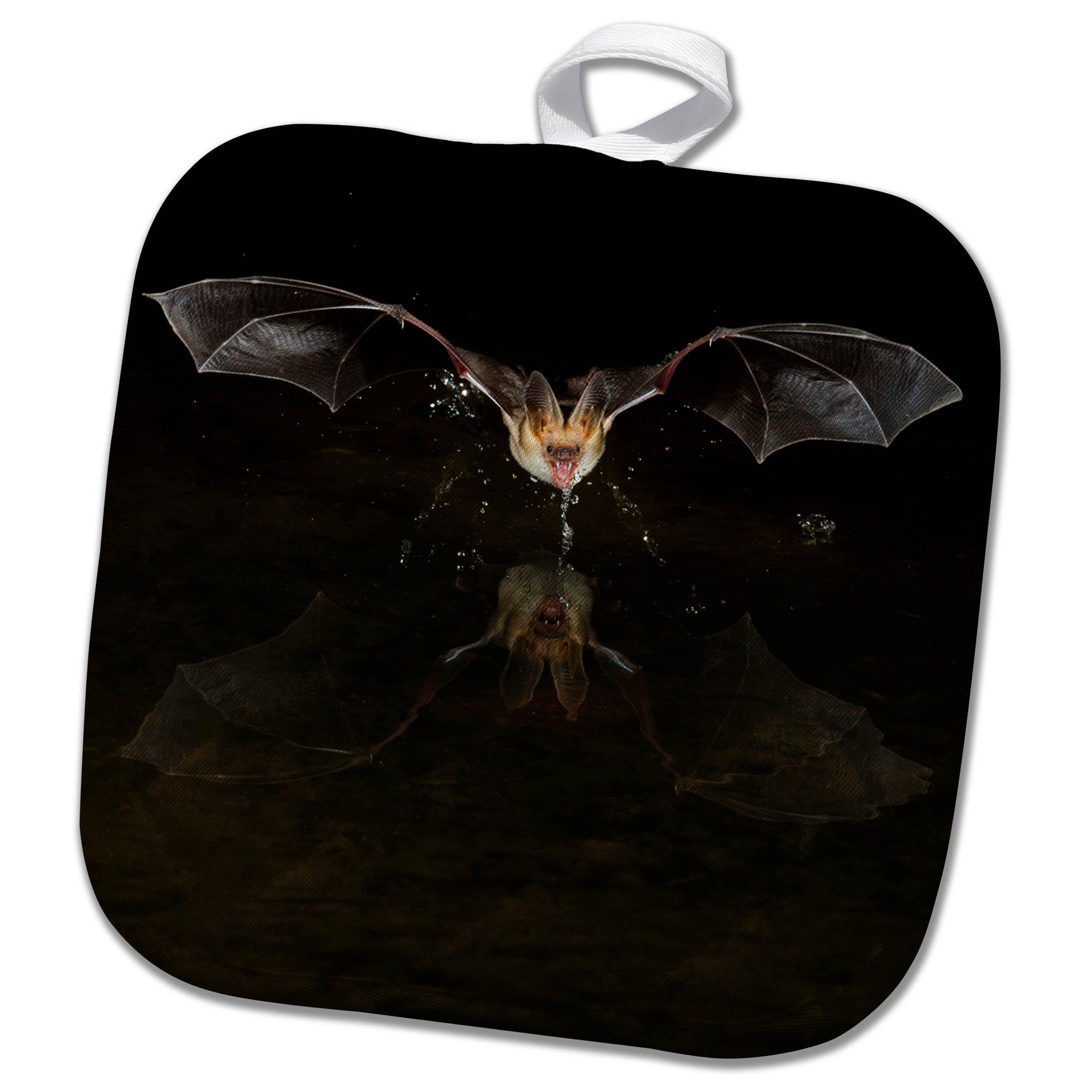 3dRose Danita Delimont - Bats - Arizona, pallid bat, Antrozous pallidus, drinking - 8x8 Potholder (phl_258690_1)