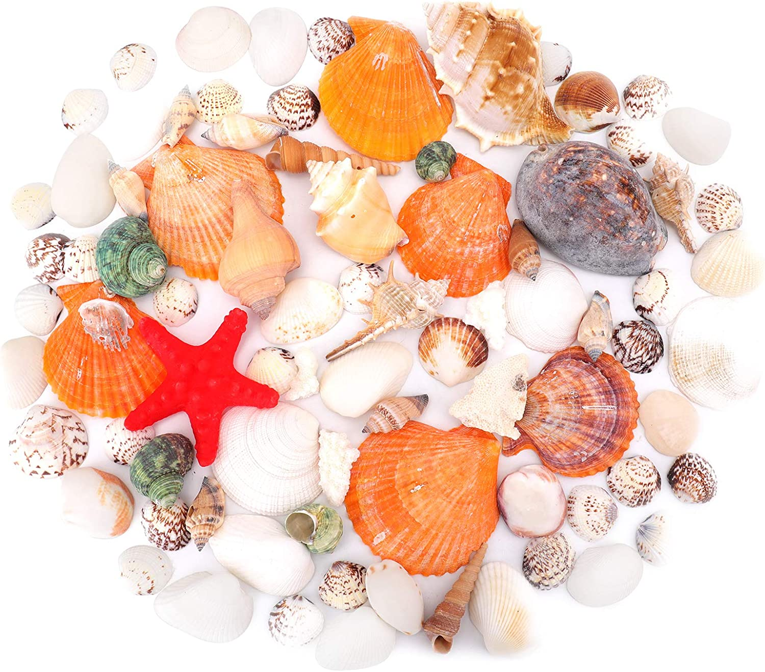 yarlung 120 Pieces Large Sea Shell Conch Starfish, Mixed Beach Seashells Colorful Natural Seashells Supplies for Fish Tank, Beach Theme Party, Candle Making, Wedding Decor, DIY Crafts