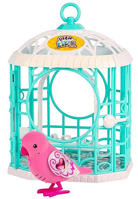 Amazon.es: little live pets Tweet pájaros habladores con Jaula ...