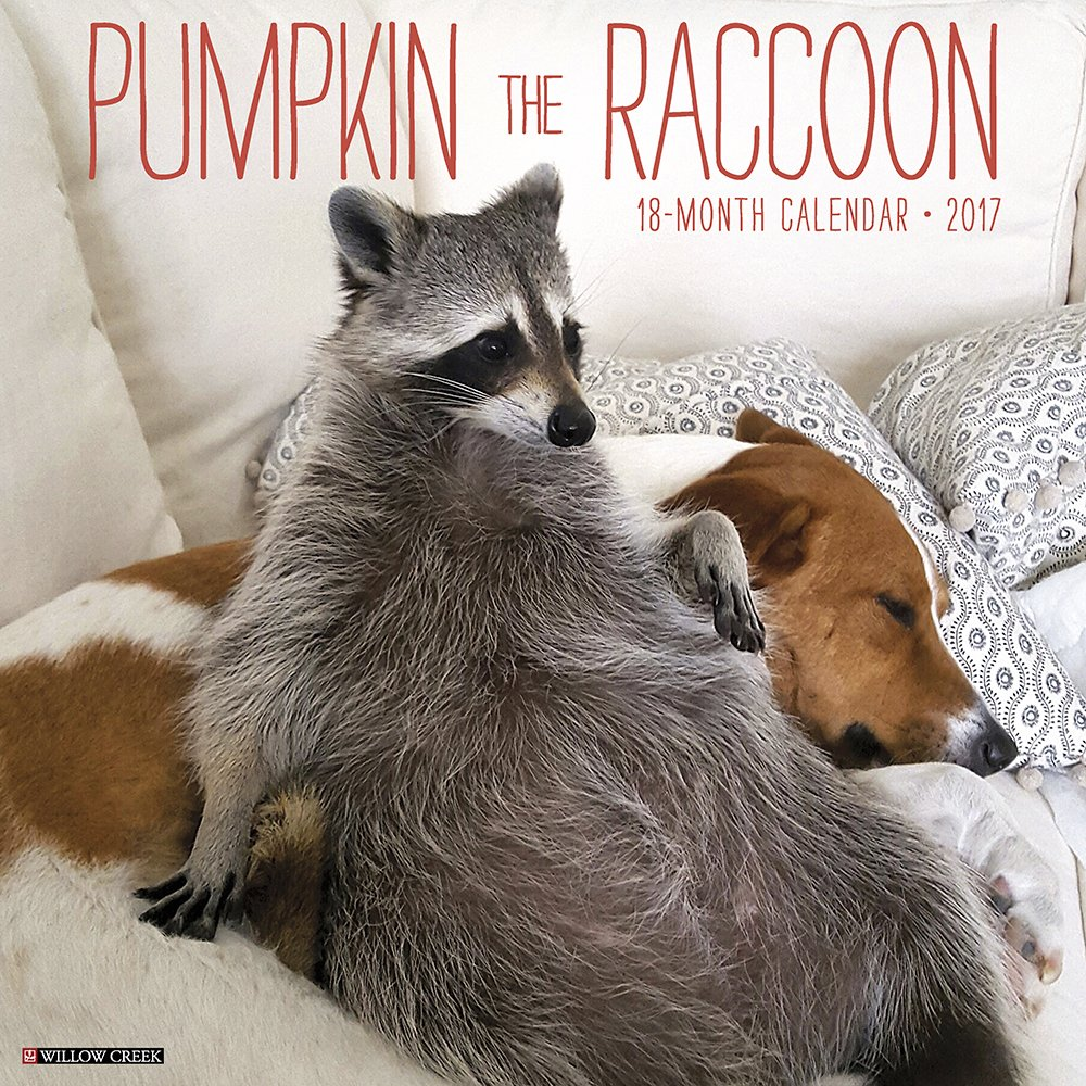 Amazoncom Pumpkin The Raccoon Wall Calendar - Pumpkin rescued raccoon