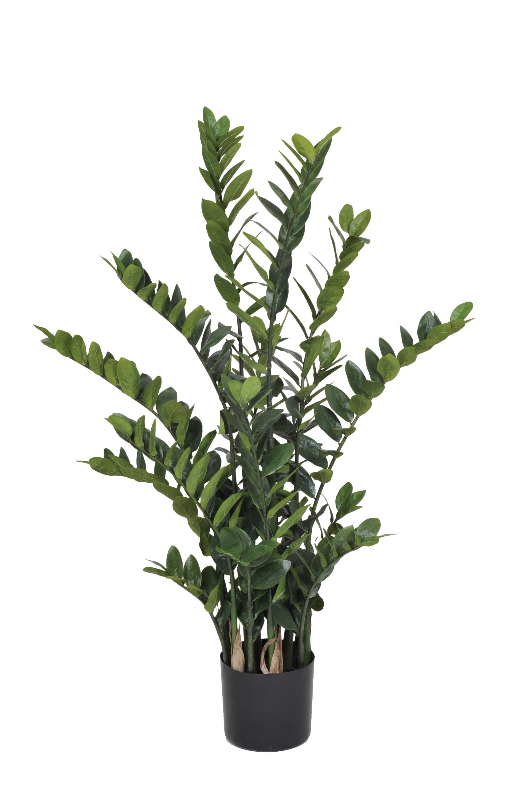 House of Silk Flowers Artificial Zamioculcas 'Zanzibar Gem', 4.5-Feet by House of Silk Flowers