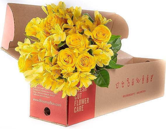 Amazon.com: 24 tallos amarillo rosa amarillo alstroemeria ...