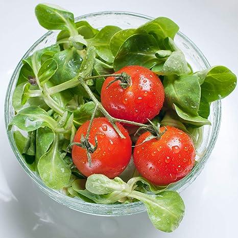 Details about  /MUSTARD Broad Leaf 100 Seeds HEIRLOOM vegetable garden SLOW BOLT salad sandwich