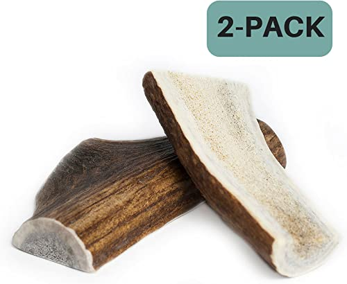 Chipper Critters All Natural Medium Whole Elk Antler Dog Chew – Made in The USA by The Best, Virtually Indestructible Treat for Dogs and Puppies – for Dental and Bone Health