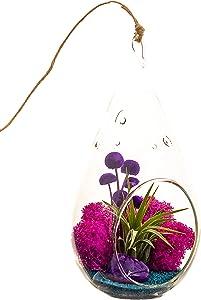 Bliss Gardens Air Plant Terrarium with Purple Agate - 7