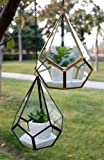 WGV Tear Drop Triangular Geometric Glass Pannel Terrarium