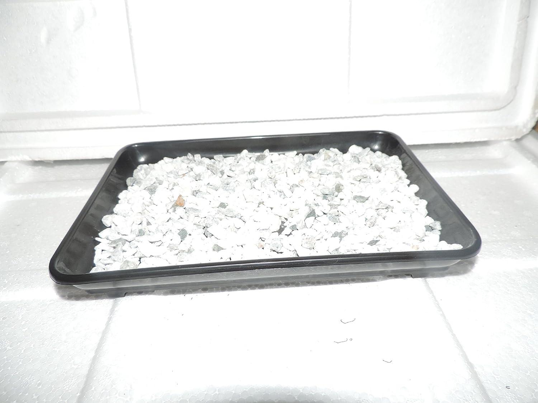 JM BAMBOO- Bonsai Humidity Drip Tray 10 L x 7 W with Pebbles Rocks