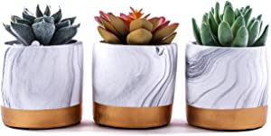 Succulent Plant Set - This Artificial Succulent Set is a Designer Look for Your Home or Office Decor. This Three Piece Potted Artificial Plant Set Makes a Great Gift.