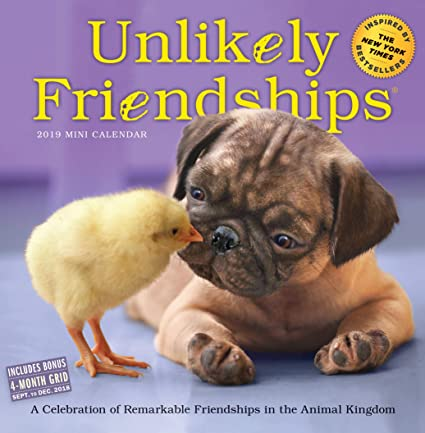 Unlikely Friendship Amazoncom Unlikely Friendships Mini Calendar 2019 7 Barnes Noble Amazoncom Unlikely Friendships Mini Calendar 2019 7
