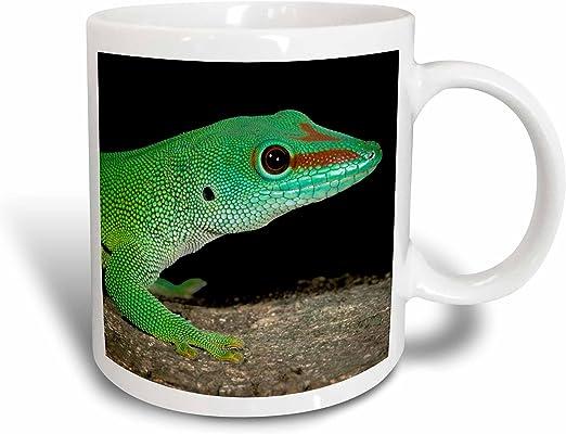 3dRose 94195/_4 Fringed Leaf-Tail Gecko Lizard Madagascar-US39 JMC0030-Joe and Mary Ann McDonald Two tone black mug 11 oz White