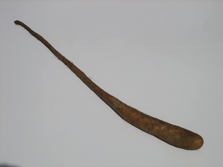 岩手県産 長芋の種芋
