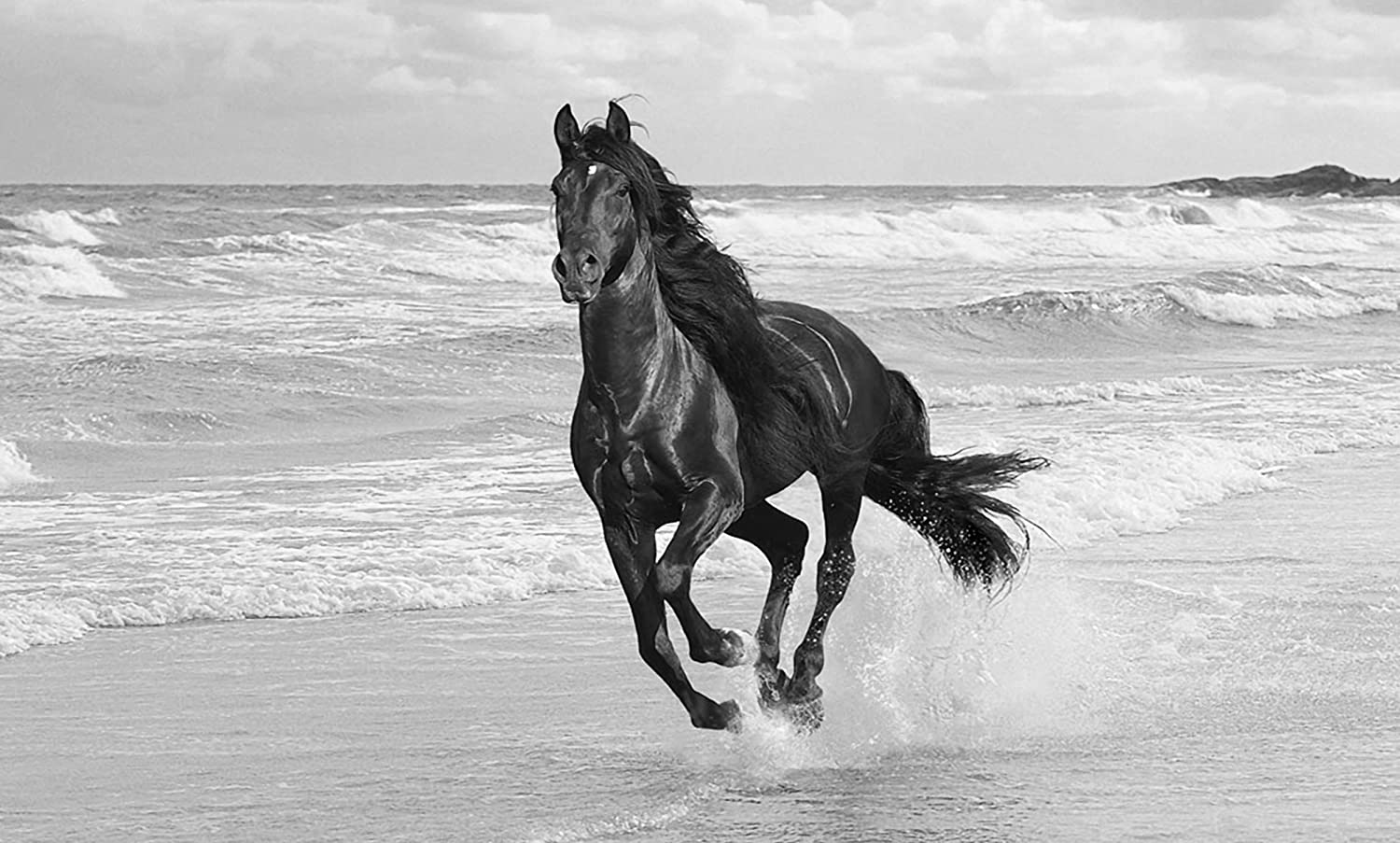 Large horse canvas art print running in the sea black and white box canvas 34 x 20 inches 86 x 51 cm mounted and ready to hang by canvas interiors