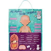 My Kids Magnet All About Body Organs Puzzle Magnetic Board, 40 cm Length x 32 cm Width