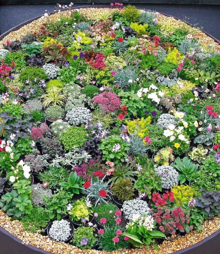 BALDUR-GartenSteingarten-Stauden-Mix 10 Pflanzen winterhart ...