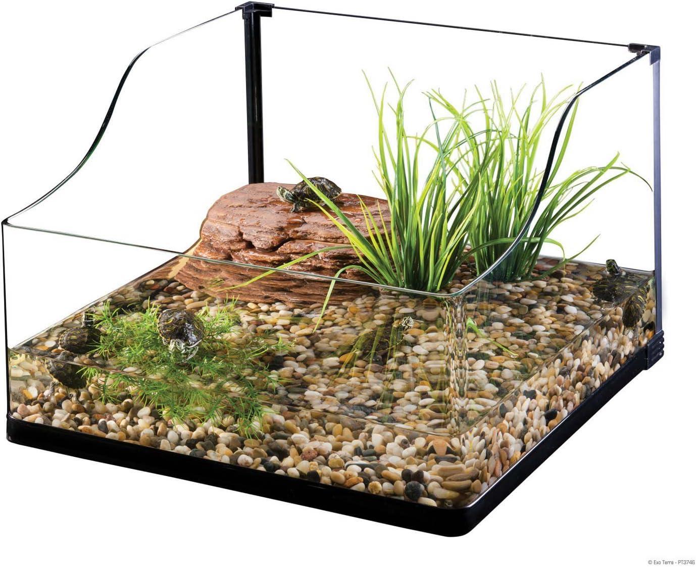 Terrarium with turtle