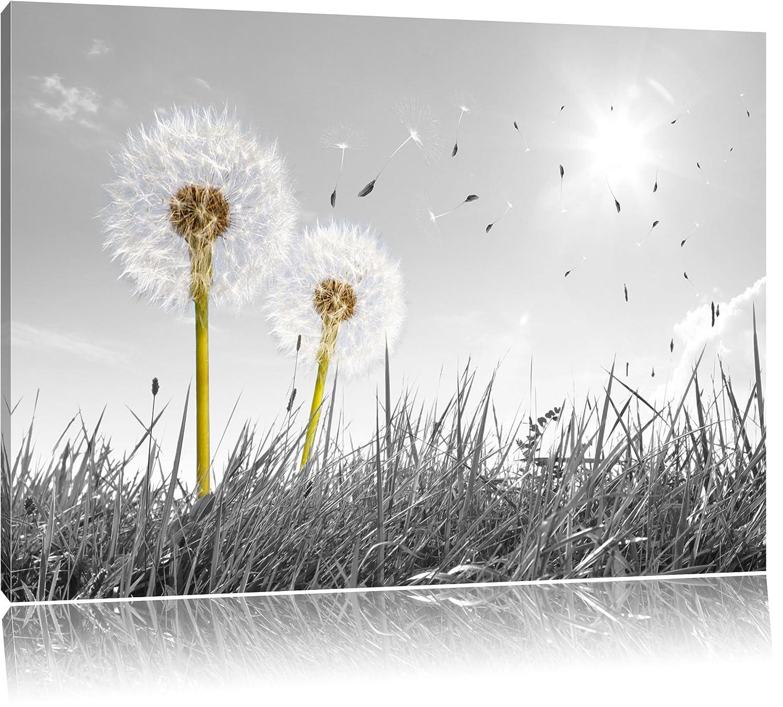 Amazon.de: Pusteblumen auf Wiese schwarz/weiß Format: 80x60 auf ...