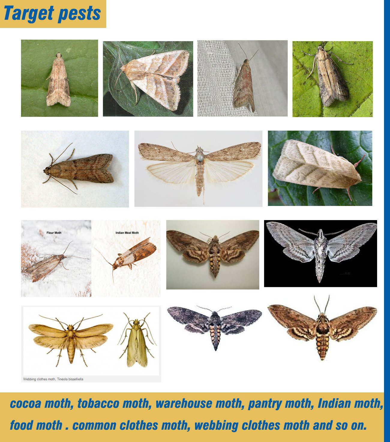 Amazon.com: Pantry and Clothes Moth Trap With Natural Pheromone ...