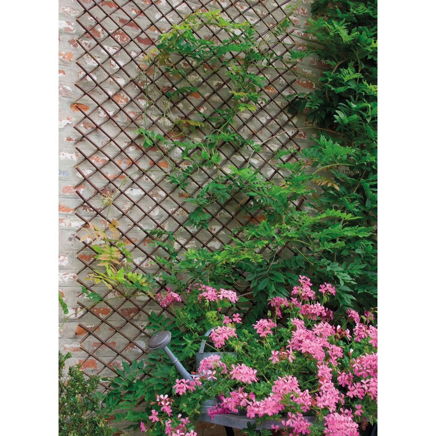 Treillis Pour Plantes Grimpantes Amazon Fr