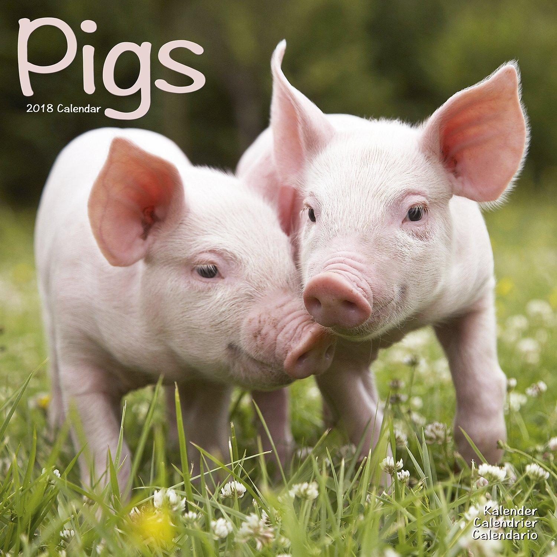 Amazon | Pigs Calendar 2018 (S...