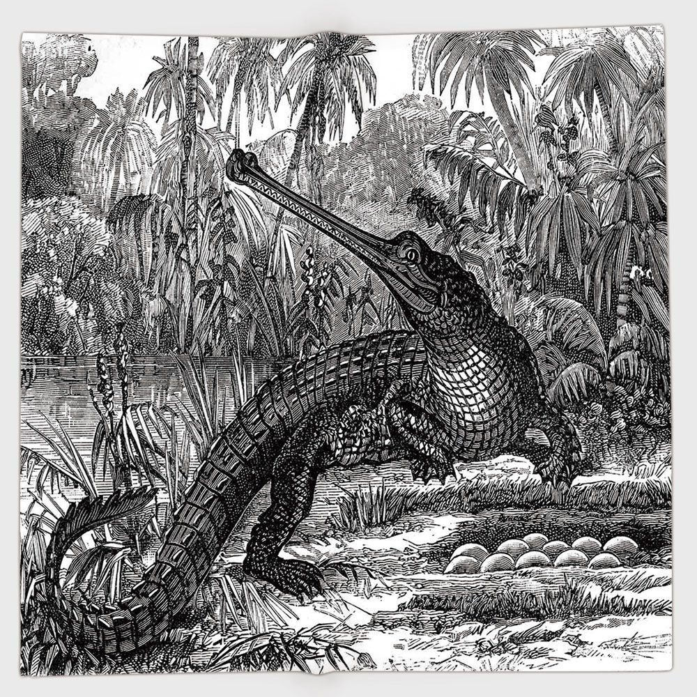 Cotton Microfiber Hand Towel,Vintage,Old Fashion Sketch of A Crocodile in Forest Wildlife Nature Woods Fossil Picture,Charcoal Grey,for Kids, Teens, and Adults,One Side Printing
