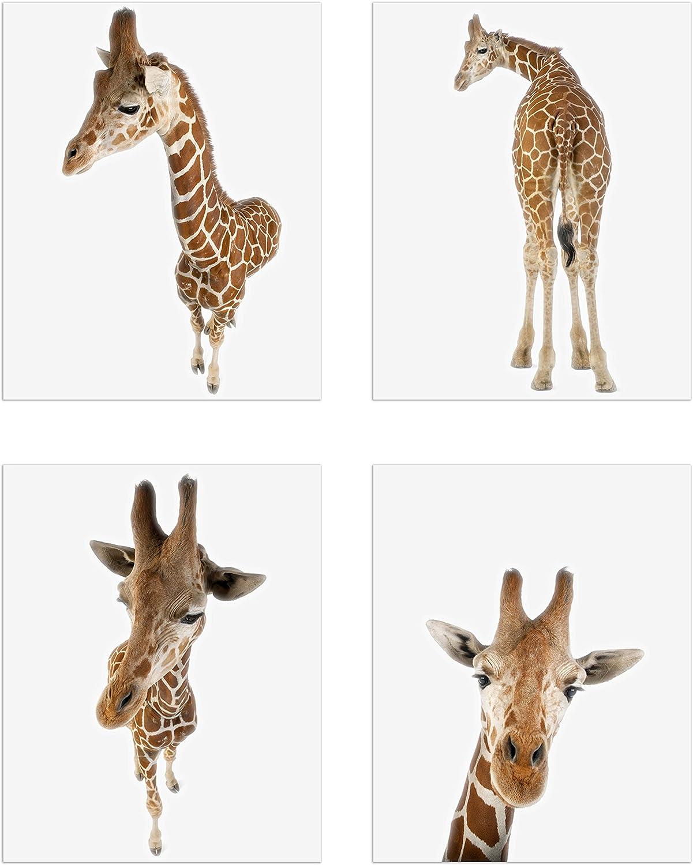 Minimalist Giraffes Prints - Set of 4 (8x10) Unique Giraffe Poses and Angles Nursery Photography Wall Art Decor