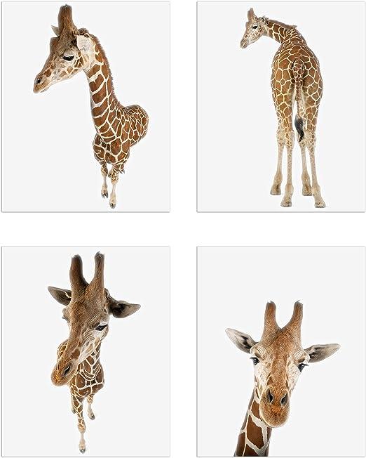 Set Giraffe