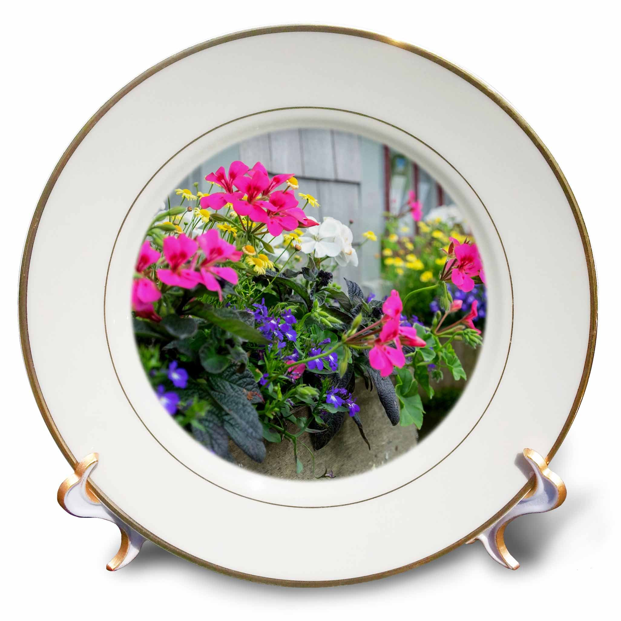 3dRose Danita Delimont - Flowers - Flowers in window boxes, Nantucket, Massachusetts, USA - 8 inch Porcelain Plate (cp_279042_1)