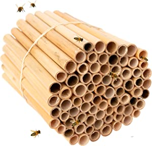Rivajam 125 Phragmite Reed Mason Bee Tubes   Refill Your Mason Bee House, Bee Hotel Nest Box, Solitary Bee Hive & Pollinator Bee Box   Mason Bee Houses for the Garden Starter Kit & Mason Bees Supplies