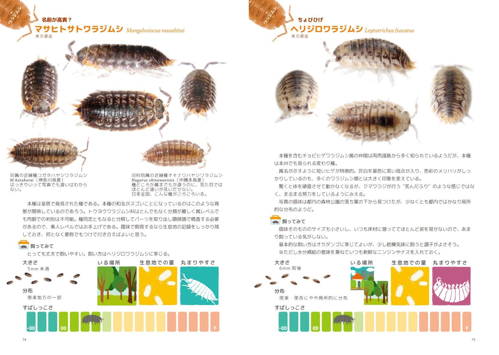 食べ物 ダンゴムシ