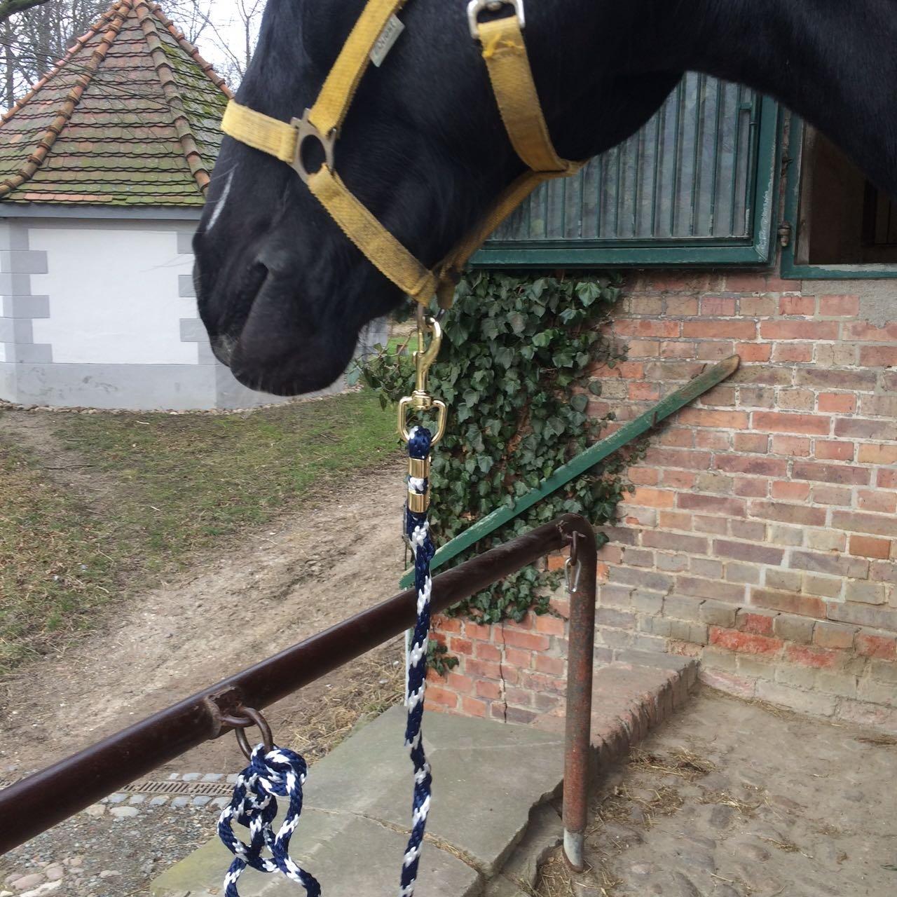 correa trenzada para en distintos dise/ños elegantes burro o cabra Cuerda gu/ía para caballo para poni